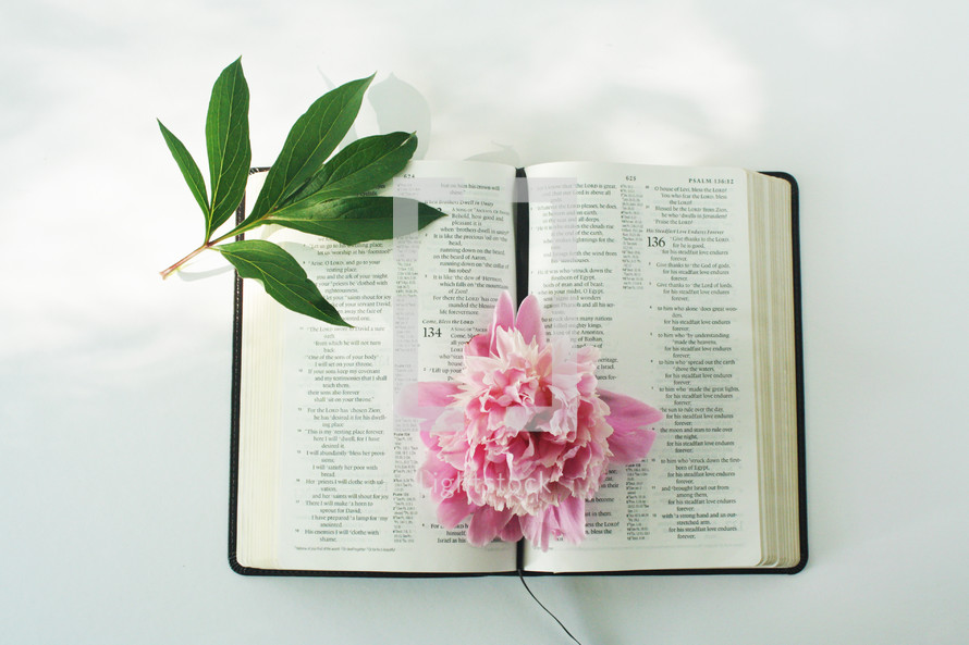 pink flower on the pages of a Bible