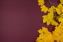 yellow fall leaves on a maroon background