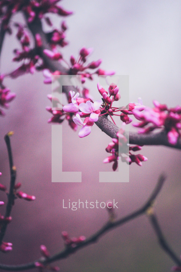 pink spring blossoms on a tree branch