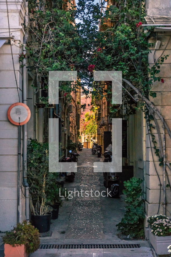 potted plants in an alley