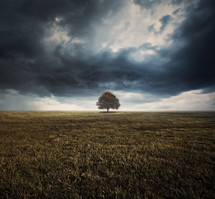 Lone tree in a field under a stormy sky