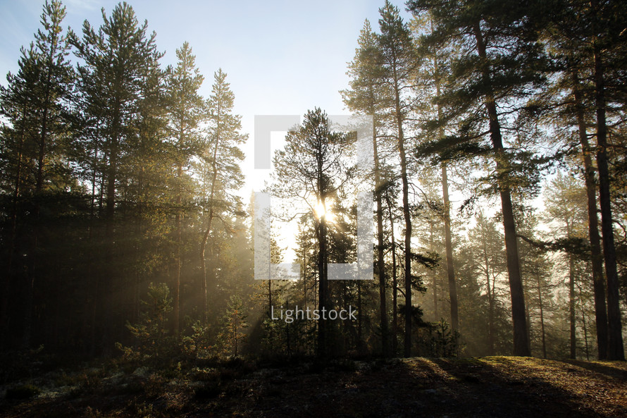 rays of sunlight through the trees in a forest