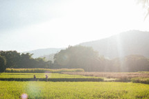 bright sunlight over tall grasses