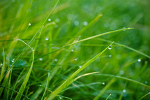 rain drops on green grass