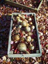 A fall harvest from a garden surrounded by fall leaves in the autumn of Rural Virginia.