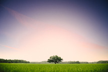 isolated tree in a green meadow