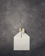 a daisy in an open envelope