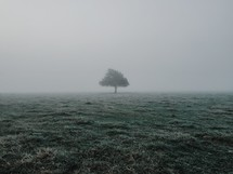 lone tree in a field surrounded by fog