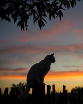 silhouette of a cat at sunset