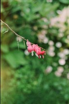pink heart flowers on a branch