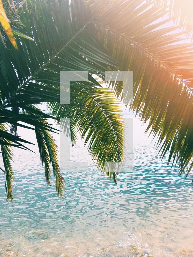 palm fronds over ocean water