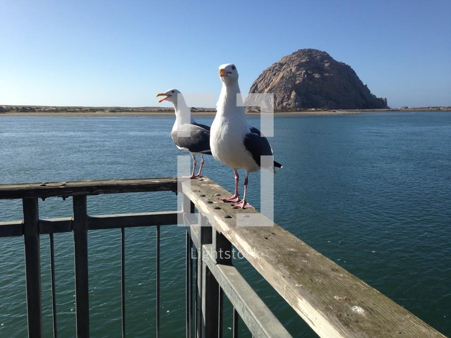 seagulls on a railing
