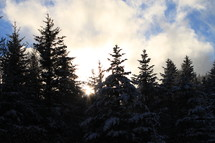 tree tops dusted with snow