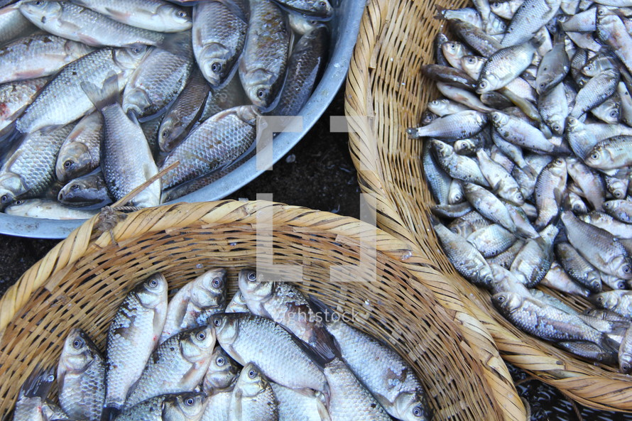 Fresh fish in baskets at morning market