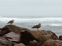 seagulls on rocks