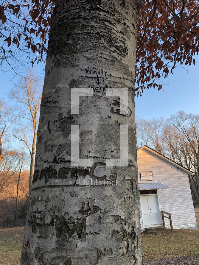 names carved into a tree trunk