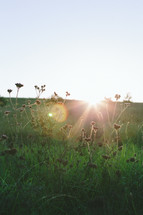 Sunlight on the horizon of a field of grass and wildflowers.