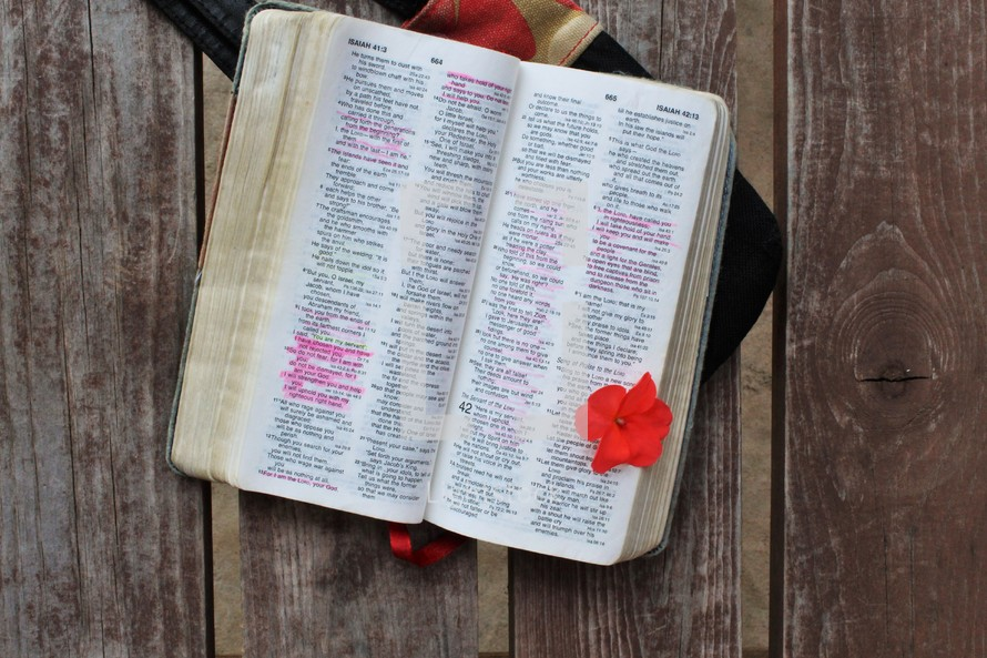 red flower on the pages of a Bible