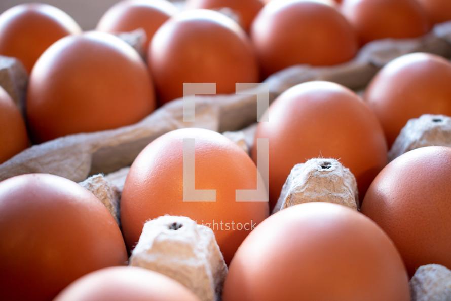 eggs in egg cartons