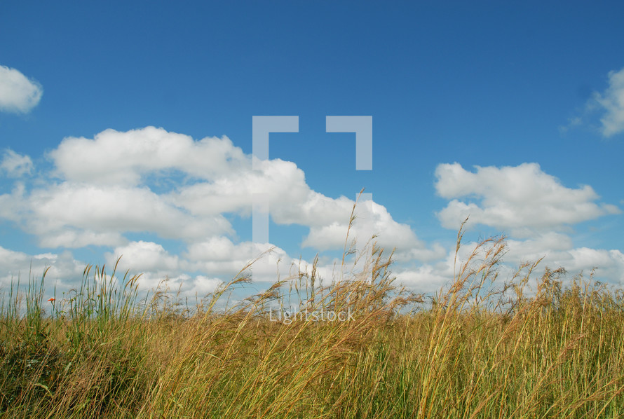 clouds and a field of wheat