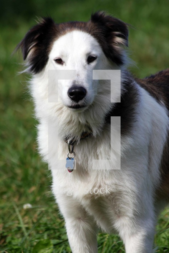 dog wearing a collar and tags