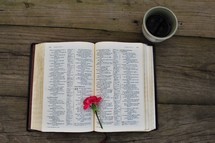 pink carnation on the pages of a Bible