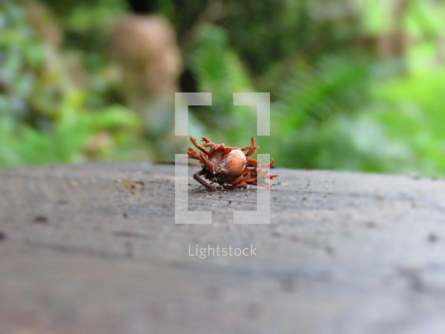Crab on a ledge.