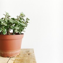 potted plant on a table