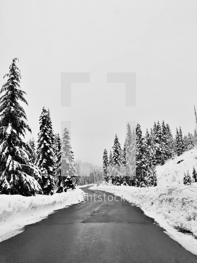 plowed road through a winter forest