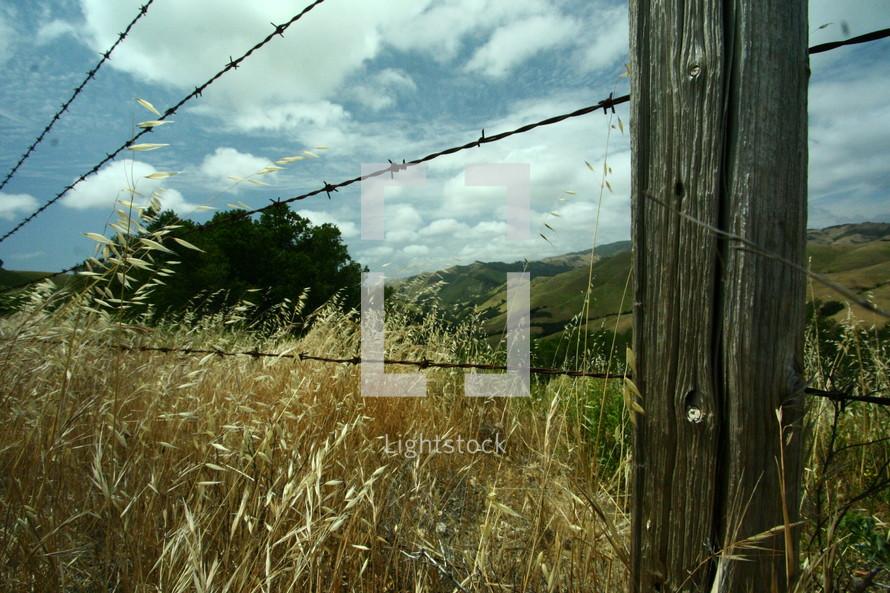 Barbwire fence in field