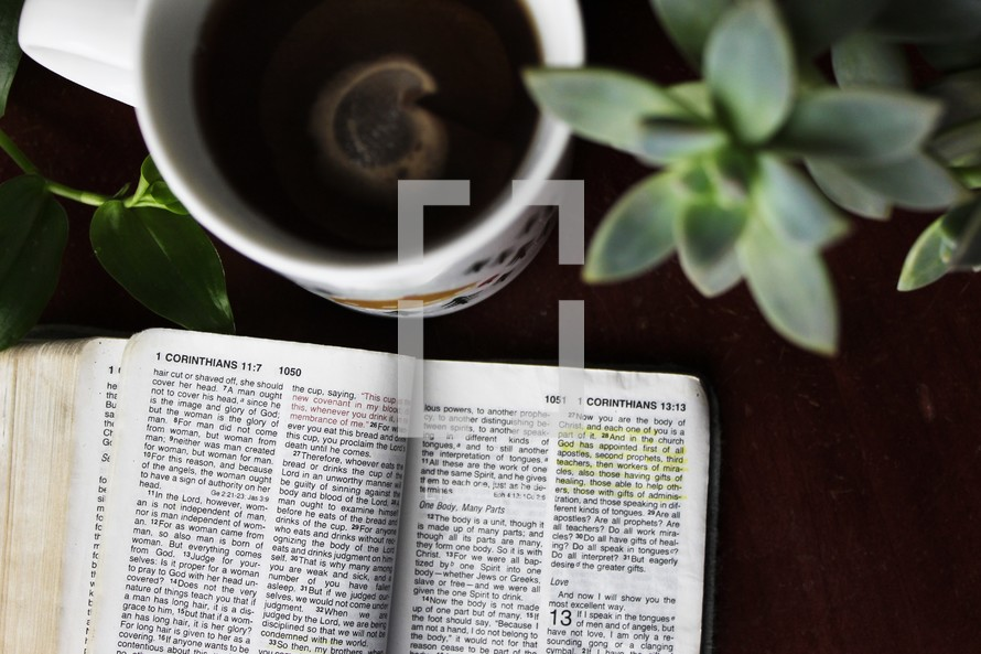 open Bible, succulent plants, and coffee cup