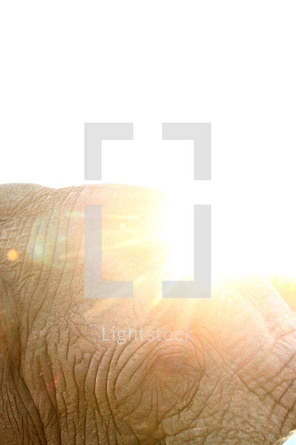 Bright sun rays on an elephant's head.