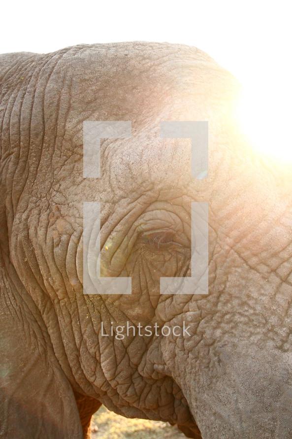 Sun flared elephant.