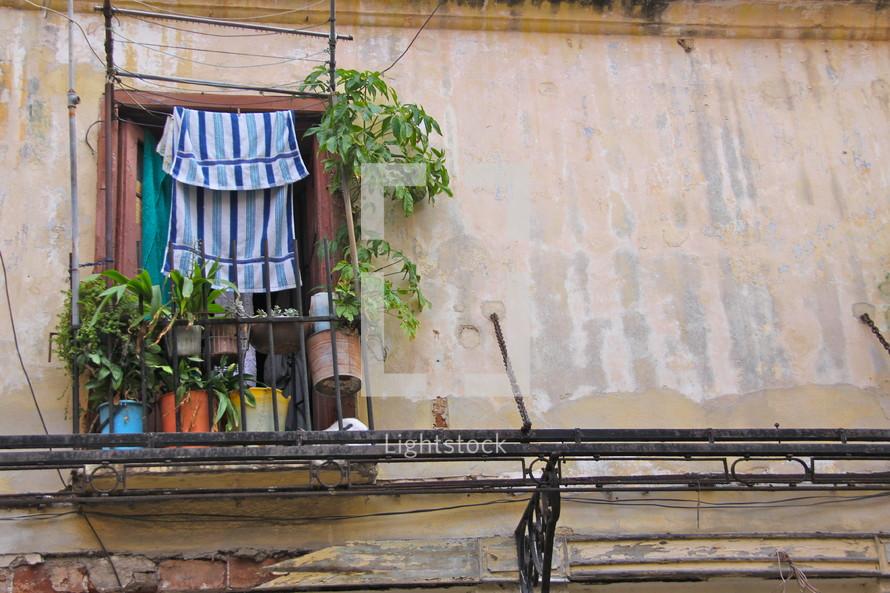 plants in a window in a run down building