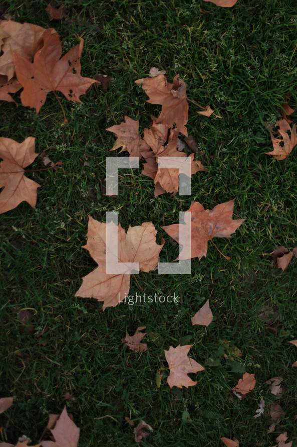 Fall leaves in the grass