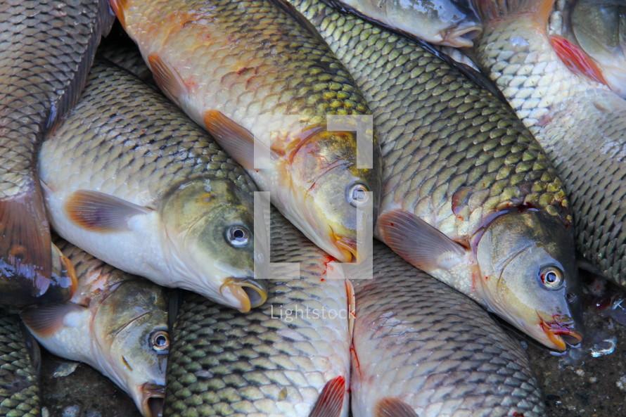 Fish at local fresh market