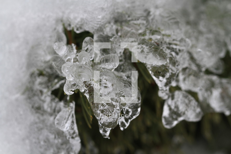 ice on a plant