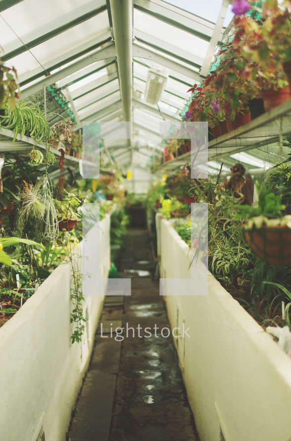 plants growing in a greenhouse