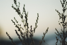 dried flowers outdoors at dusk