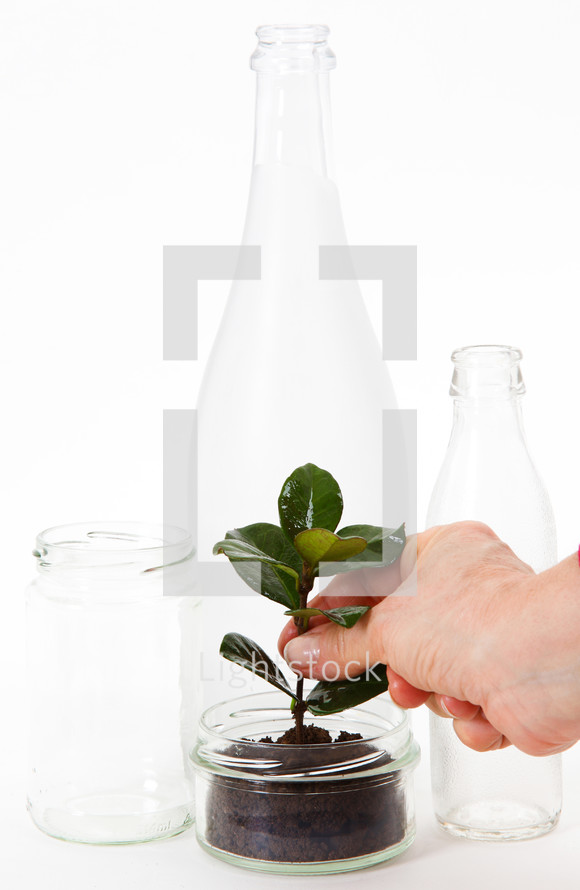 Cans and glass bottles with seedling.