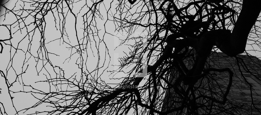 web of tree branches
