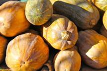 Fresh pumpkins at morning market