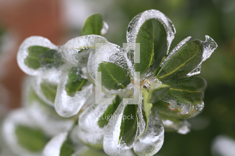 ice covered green leaves