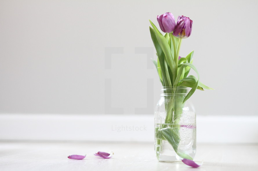 tulips in a jar