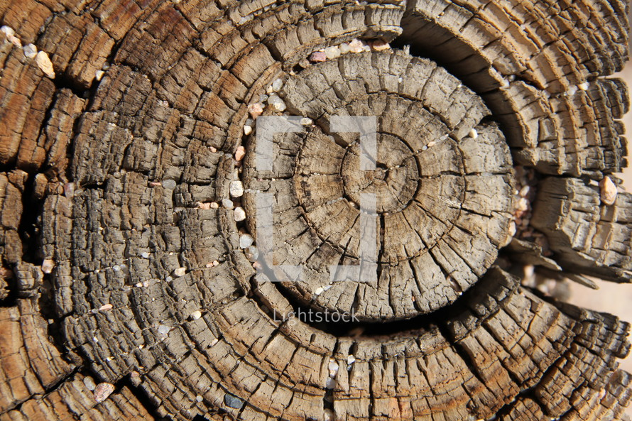 Wood rings across the grain of a tree