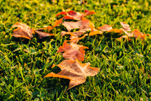 Autumn leaves on the grass making a cross.