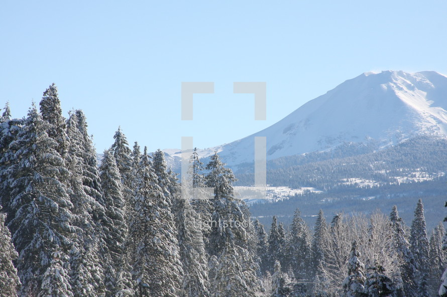 Mountains with snow and pine trees