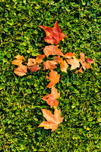 Autumn leaves forming a cross on the grass.