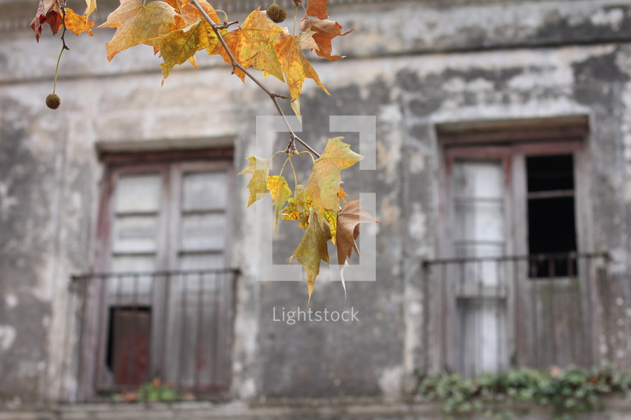 Fall leaves. Yellow leaves. Autumn. Fall. Ruins. Old buildings.