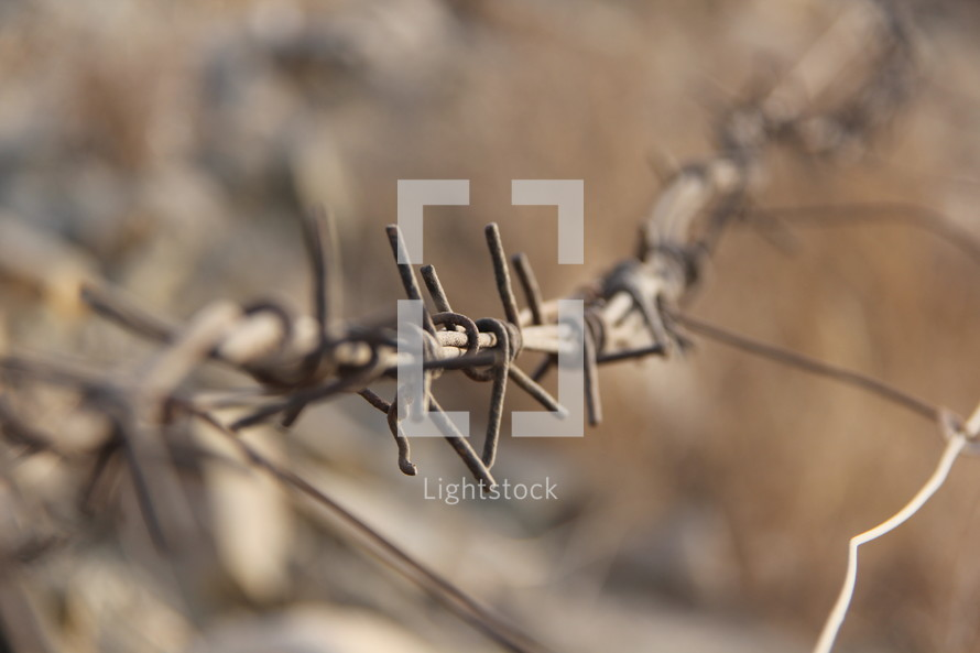 Rusted strands of barbed wire